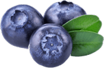 Blueberries 1.png
